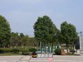天章水岸国际·和园项目现场